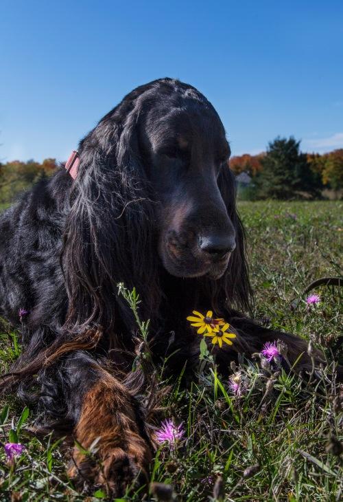 dog n flower