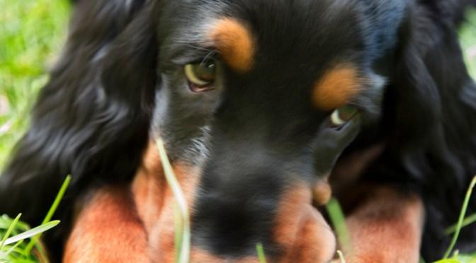 Rethinking Puppy Socialization