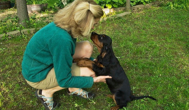 Gordon Setter Health Clearances before Breeding