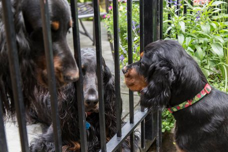 pup n adults fence