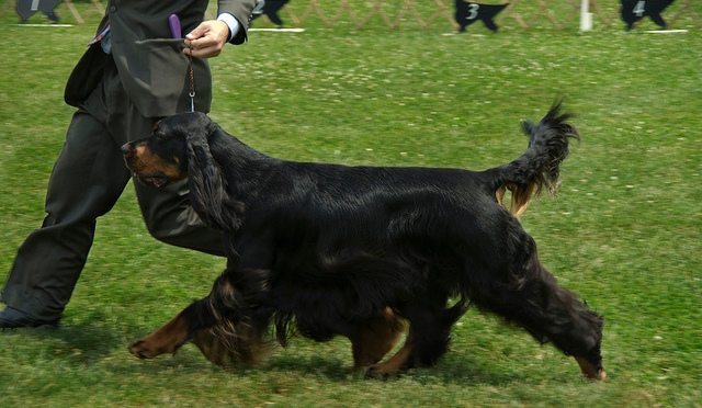 Gordon Setter movement – list of reference material