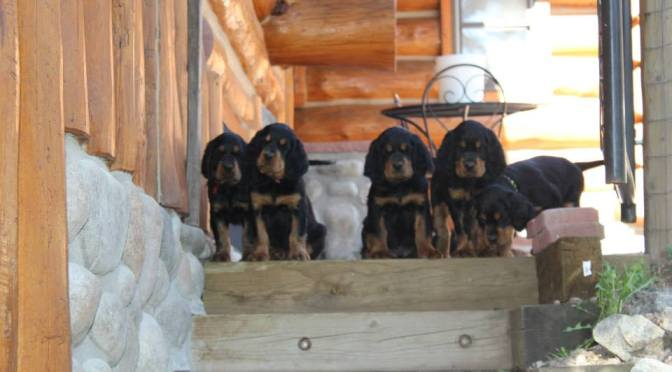 Raising Puppies to Be Brave: The Top 10 Ways to Create Confident Dogs
