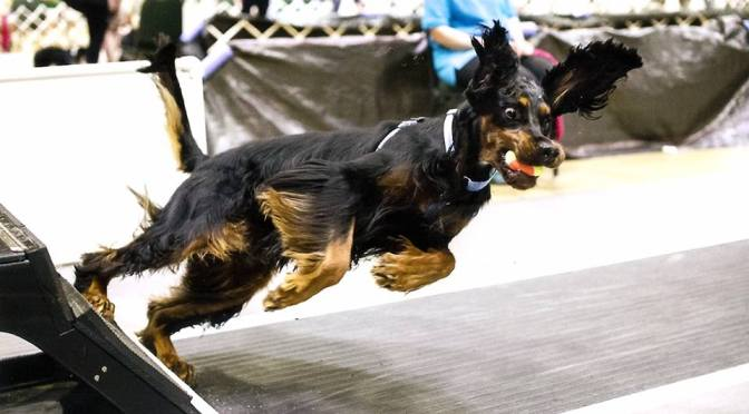 Flyball is Flipping Fun!