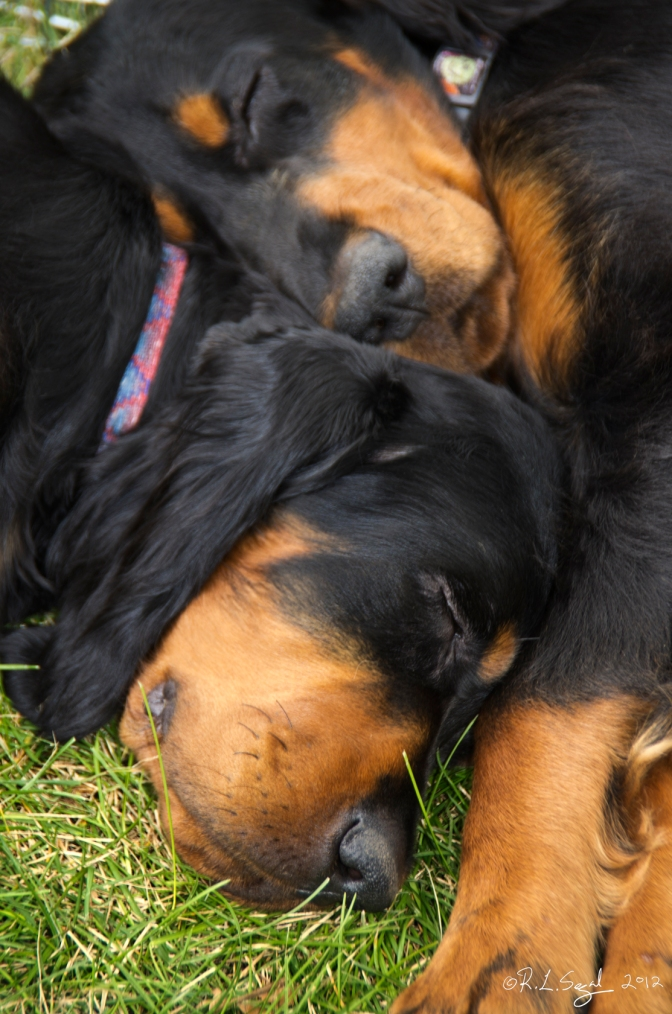 Is Your Dog Resource Guarding?