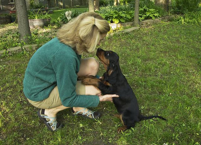 Gordon Setter Health Clearances before Breeding