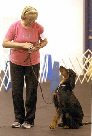 Let's Share Gordon Setter Training Tips!