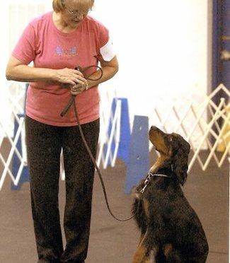 Let's Share Gordon Setter Training Tips!